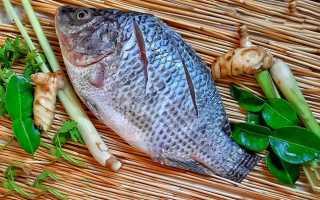 БЖУ рыбы дорадо