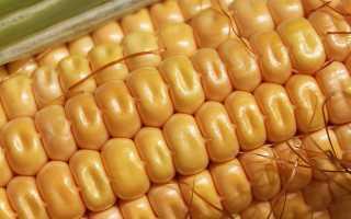 БЖУ кукурузы