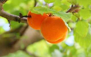 Гликемический индекс абрикоса