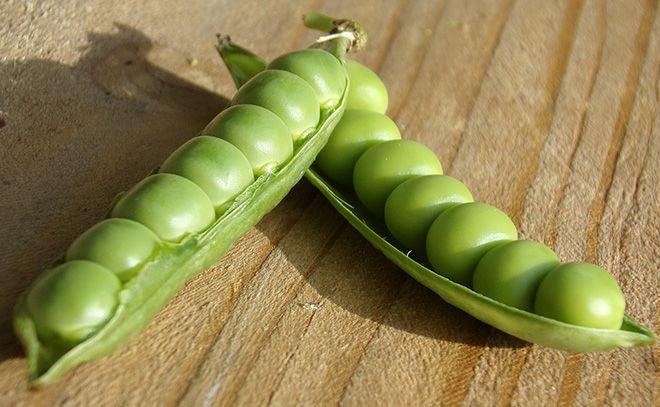goroh-zelenyj