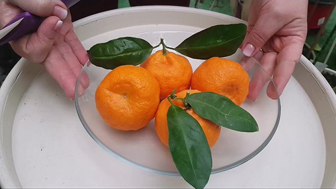 indeks-mandarina