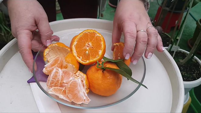 svezhie-mandariny