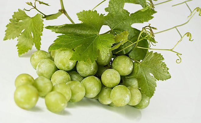 belyj-vinograd