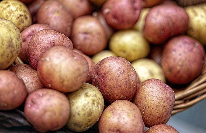 molodoj-kartofel