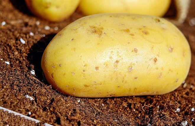 syroj-kartofel